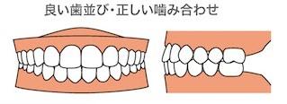 いい歯並び・正しい嚙み合わせ