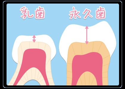 歯というのはとても硬いエナメル質、象牙質、歯髄で構成されています 乳歯と永久歯のエナメル質の厚みも違う
