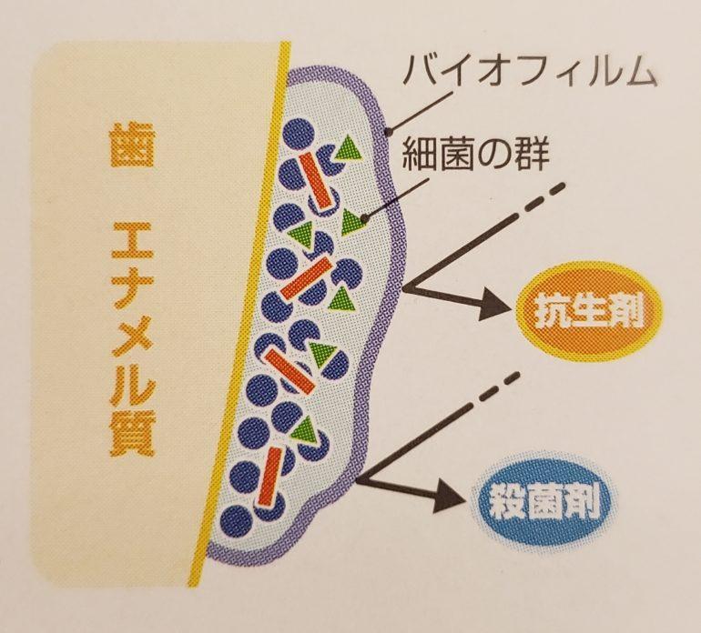 バイオフィルムの繁殖 PMTC 芦屋川聖栄歯科医院・矯正歯科